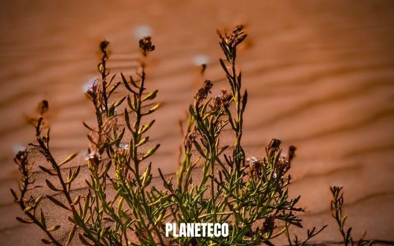 La désertification : Une menace pour notre sécurité alimentaire et nos moyens de subsistance
